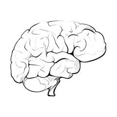 Prawie połowa mózgu zaangażowana jest w przetwarzanie grafiki.